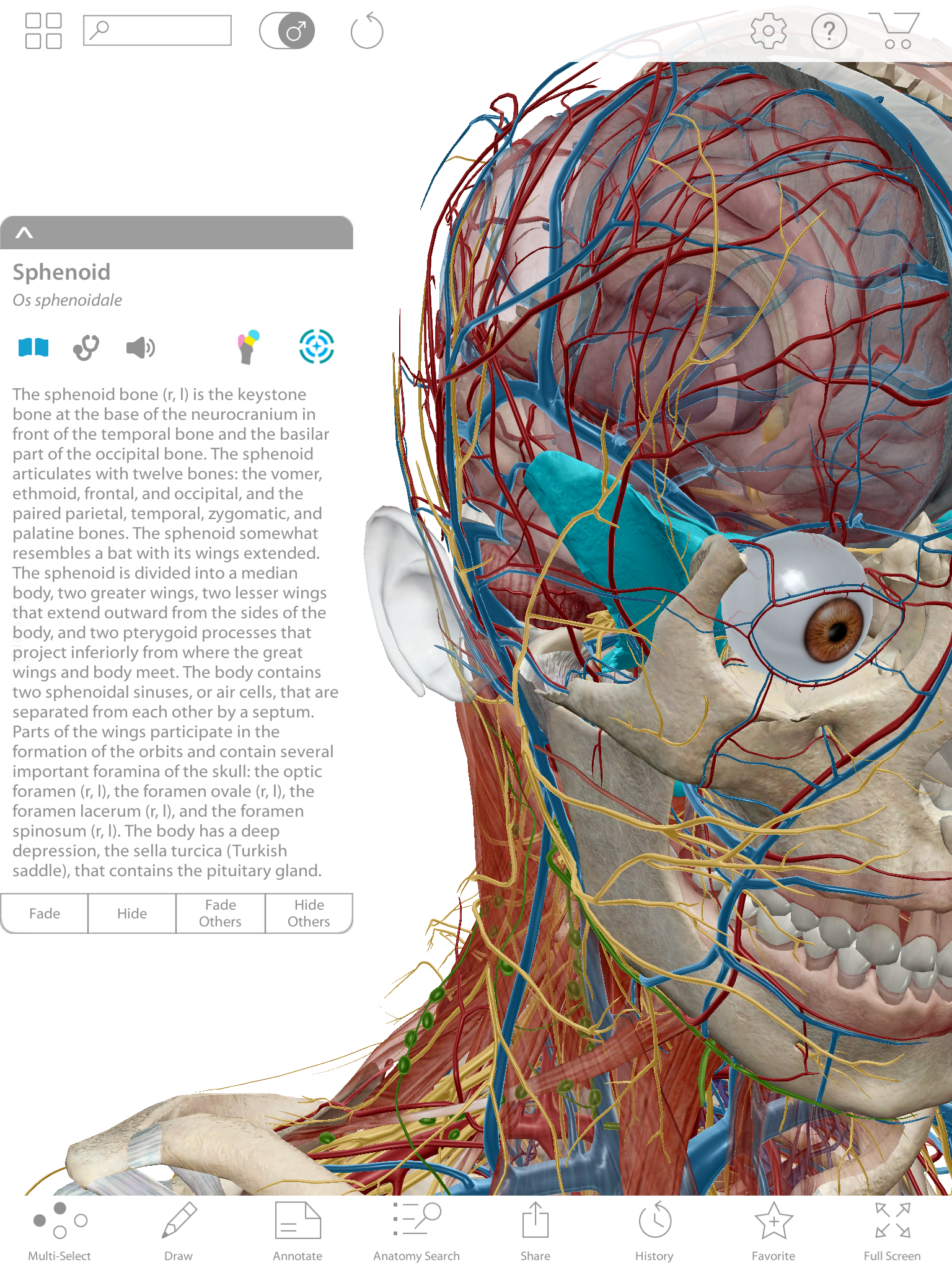 Compare Human Anatomy Atlas and Anatomy & Physiology – Visible Body